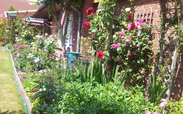Rosengaren an der überdachten Terrasse